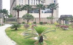 医院草地绿植