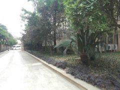医院花园绿植